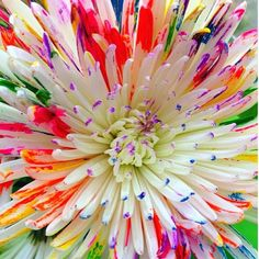 I love rainbow dipped diasies! So fun,vibrant,and fresh:)