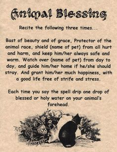 Animal Blessing, Book of Shadows Page, BOS Pages, Wicca Poster, Real Witchcraft in Collectibles | eBay