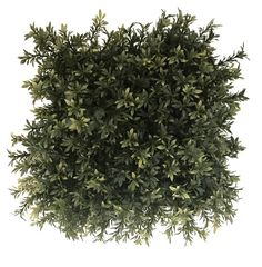 Looking for artificial hedge foliage? Leaf Structure, Artificial Hedges, Boxwood Hedge, Plastic Mesh, Decorative Wall Panels, Wall Decor, Herbs, Leaves, Kitchen