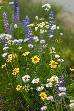 Country wildflowers.