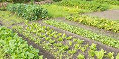 La première des qualités de Agnes est sa générosité. Elle est capable de donner tout ce qu'elle a à qui se montre fidèle à ses côtés. On lui prend tout ? Pas de problème, elle retombera sur ses pieds à la prochaine saison. Elle aime le rouge et le vert en été, le jaune à l'automne... pourquoi aimer toute l'année la même couleur ? Agnes peut être fantasque et aime passer du temps à prendre soin des fruits et légumes plantés dans son jardin et ce pour le bonheur de tous !