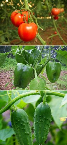 Alternative Gardning: Things I learned about gardening from Pinterest