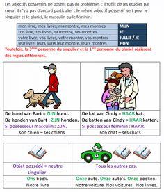 Les adjectifs possessifs en néerlandais