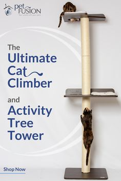 Pet Fusion ultimate cat climber, and activity tree tower. - Cat AccessoriesPet Fusion ultimate cat climber, and activity tree tower. Comes with tall scratching posts and modern stained platforms, espresso finish. A better and more stylish, mode Diy Cat Tent, Cat Wall Shelves, Cat Castle, Cat Climber, Animal Gato, Cat Towers, Cat Stands, Cat Room, Pet Furniture