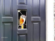 Stained glass owl, Louth Lincolnshire