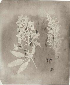 William H. Fox Talbot, 1839