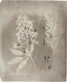 William H. Fox Talbot, 1839