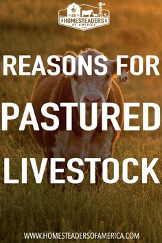 Our family works to raise much of our own food including meat Meat Rabbits, Meat Chickens, Backyard Farming, Chickens Backyard, Happy Animals, Farm Animals, Types Of Tumors, Modern Homesteading, Grass Fed Beef