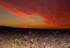 Resultado de imagen para flor del desierto florido al desierto florido