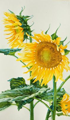 Watercolor demonstration of sunflowers by artist Lisa Hill Step 4