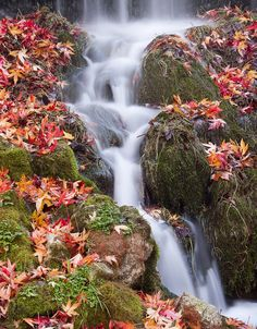 "photography: ""waterfall by helen burgess "" Beautiful Sites, Beautiful Places To Visit, Life Is Beautiful, Beautiful Waterfalls, Nature Pictures, Amazing Nature, Nature Photography, Scenery, Autumn"