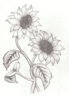 best 25 sunflower drawing ideas on sunflower tattoos Pencil Drawings Of Flowers, Pencil Art Drawings, Art Drawings Sketches, Easy Drawings, Art Sketches, Drawing Flowers, Realistic Flower Drawing, Easy Realistic Drawings, Flower Sketch Pencil