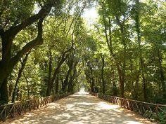 Parco di Capodimonte, la principal zona verde de #Nápoles. http://www.guias.travel/blog/napoles-se-viste-de-verde-para-brillar-bajo-el-sol-del-sur/ #Italia