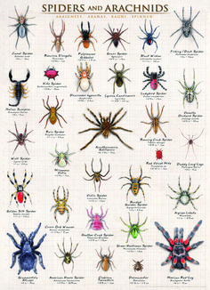EuroGraphics Spiders and Arachnids 1000-Piece Puzzle. Featuring over 25 arachnids species, including scorpion, Mexican red-leg and black widow, this educative puzzle will bring a lot of fun and a great learning experience about these fascinating creepy critters.