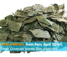 Guayusa (Ilex guayusa) 50 gr