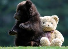 Bear by floridapfe, via Flickr