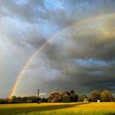 ...nach dem Regen //...after the rain  #regenbogen #rainbow #summersun #regenwetter #regenhimmel #feld #wegesrand #wiese #blauerhimmel #skyporn