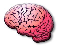 Att detoxa kroppen från gifter och slaggprodukter är något som många gör regelbundet. Det ger ny energi, kan bidra till viktminskning och gör gott för kroppen och alla dess funktioner. Även hjärnan kan imellanåt behöva en detox för att rensa ut giftiga tankar som obefogad oro, negativitet och alla självvalda onödiga måsten. När du detoxar din hjärna så kommer du att minska i vikt mentalt, bli lättare i sinnet och öka ditt välbefinnande.