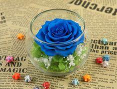 Hoa hồng Magic - Mẫu ecuador 1