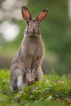 I love this wonderful photo (but can't trace it's original source). Spring rabbit in the garden.