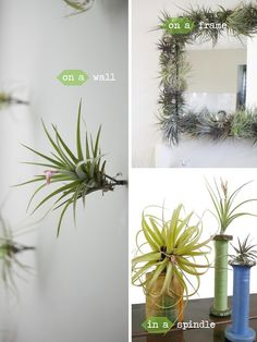 SPINDLES!! Decorating with air plants via HomeGoods