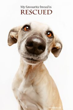 Wish I could rescue you all sweet puppy ~ •.• ~ (Favorite breed by Elke Vogelsang on 500px)