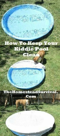 How To Keep Your Kiddie Pool Clean I  The Summer