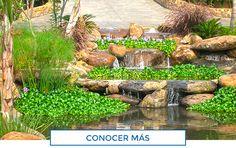 Albercas de Calidad | Construccion de Albercas, Jacuzzis, Cascadas Artificiales, Diseno de jardines