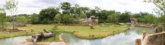 Imagen de http://cincinnatizoo.org/wp-content/uploads/2014/03/africa2-1120x311.jpg.