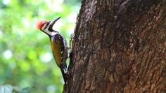Woodpecker by Saikanth Dacha on 500px