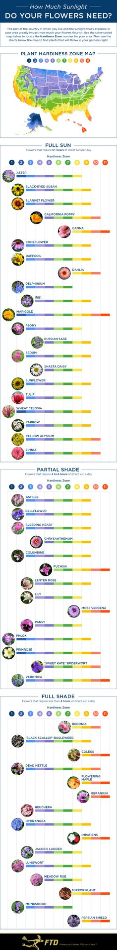 Flower Sun Needs Infographic