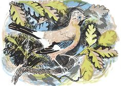 'Jay' by Mark Hearld. Editioned at the Curwen Press (lithograph) Linocut Prints, Poster Prints, Art Prints, Posters, Glasgow School Of Art, Unique Paintings, Small Paintings, Royal College Of Art, Nature Illustration