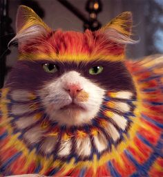 It's a tie-dyed cat! (Not really.)