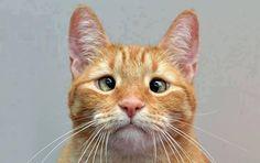 Um olho no peixe e outro no gato ( * - * )