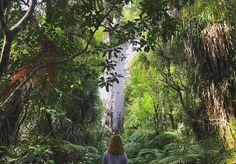 (TAG Waipoua Kauri forest) Dans le fin dond de la forêt à #Auckland #TopitoVoyage : @justinegrbg
