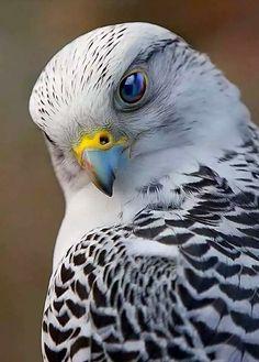 Bird Of Prey Photography Raptors Ideas Pretty Birds, Beautiful Birds, Animals Beautiful, Cute Animals, All Birds, Birds Of Prey, Love Birds, Exotic Birds, Colorful Birds