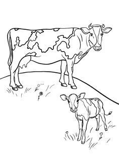 Image result for coloring book cows   Omalovánky   Pinterest   Cow ...