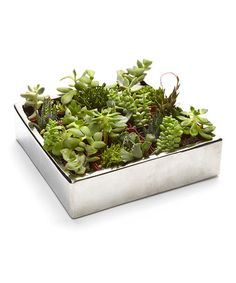 Look what I found on #zulily! Live Succulent Gift Set - 25 Plants #zulilyfinds