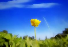 Solitary Flower Photograph by Jean Francois Gil
