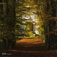 autumn view - #GdeBfotografeert Autumn Leaves, Country Roads, Explore, House Styles, Home Decor, Decoration Home, Fall Leaves, Room Decor, Autumn Leaf Color