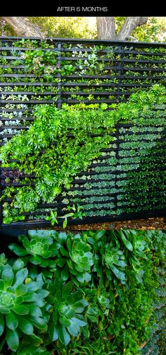 """Amazing """"Living Wall"""" of succulent plants - here's a full tutorial to help you create your own little green oasis of calm nature Zen, in just the very little space it takes for a section of privacy fence."""