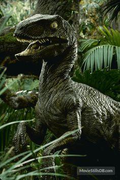 jurassic park world Publicity still Jurassic Park Raptor, Jurassic Park Poster, Jurassic Park 1993, Velociraptor Jurassic Park, Jurassic World 2015, Jurassic World Dinosaurs, Jurassic Movies, Dinosaur Fossils, Dinosaur Art