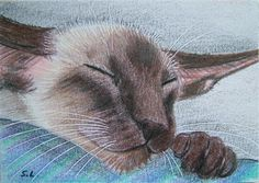 Siamese Cat Tattoos, Siamese Cats, Kittens, I Love Cats, Cute Cats, Big Cats, Oriental Shorthair Cats, Oriental Cat, Whippet Dog