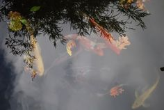 a beautiful Koi pond awaits the new owners of this gorgeous Brown County Indiana Cottage Estate
