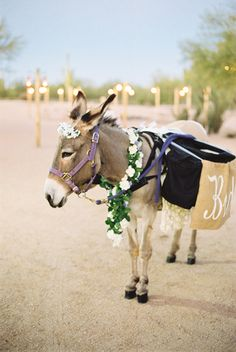 beer burro @weddingchicks