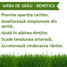Miracolul de pe CAMP: Sucul din IARBA DE GRAU Alter, Healthy Life, Herbs, Healthy Living, Herb, Spice