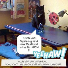 Bitte  eure Stimme für unsere Katze abgeben =)
