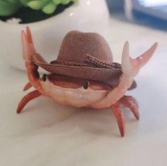 Funny Animal Pictures, Cute Funny Animals, Cute Baby Animals, Funny Cute, Cute Pictures, Unique Animals, Animal Pics, Crab Art, You Are Cute