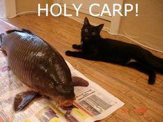 Carp 1