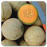 Organic Sivan F1 Hybrid Melon